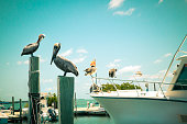 Toned nautical scene with pelicans on wooden post at pier with boat in the background