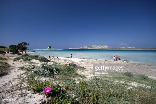 Pelosa beach Stintino Sardinia Italy
