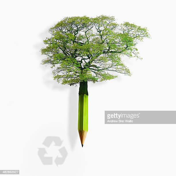 Pencil formed from living tree with recycling logo