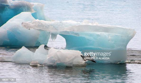 A penguin dives from an ice block in front of Brazil's Comandante Ferraz base in Antarctica on March 10 2014 AFP PHOTO / VANDERLEI ALMEIDA