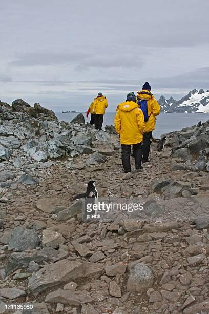 Penguin Following Antarctica Tourists