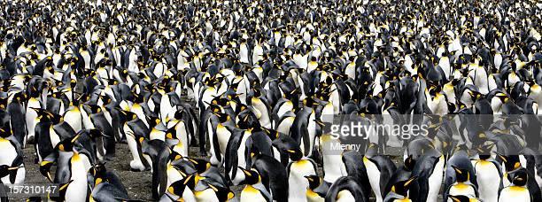Penguin Panoramic