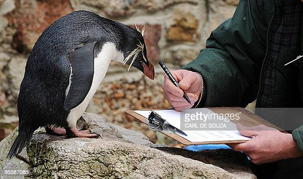 Penguin Ricky the Rockhopper looks at a zookeeper's clipboard during a photocall to promote London Zoo's annual stock take of animals on January 5...