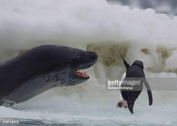 Penguin seal nightmare