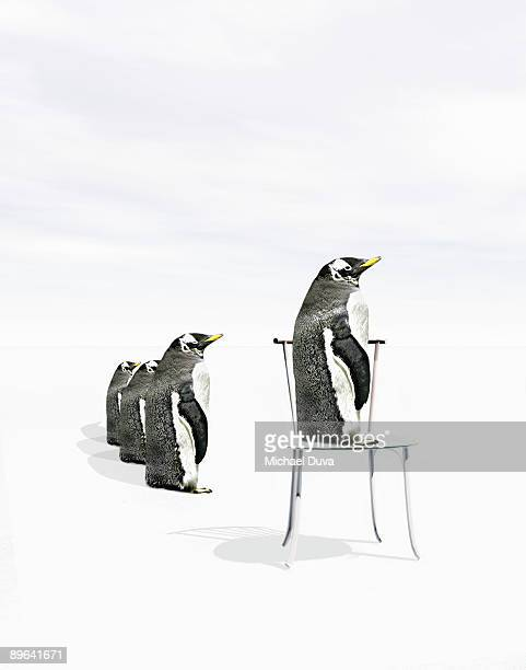 Penguins lined up, one standing on a chair