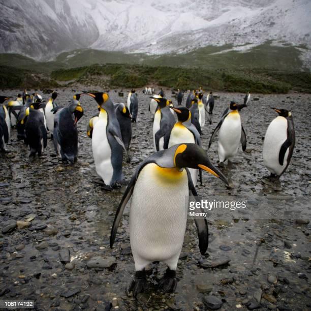 Penguins in der Nähe der schneebedeckten Berge in South Georgia