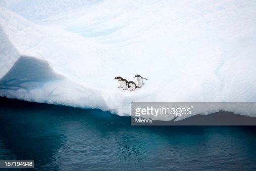 penguins on iceberg antarctica : Stock Photo