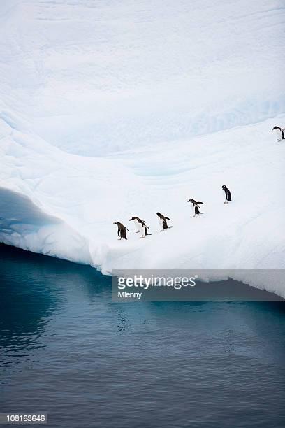 Pinguine auf Eisberg in der Nähe von Wasser