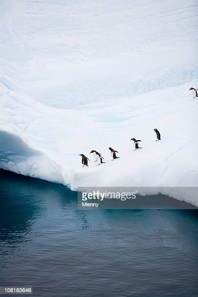 Penguins On Iceberg Near Water