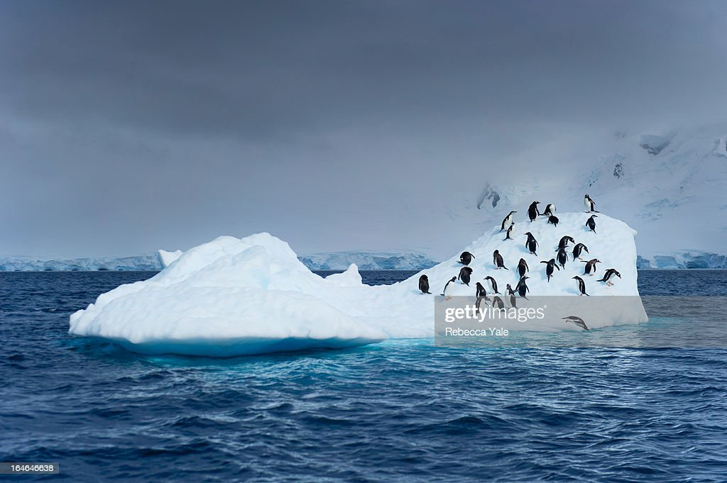 Penguins on Iceberg : Stock Photo