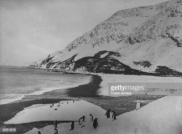 Penguins on the coastline of Elephant Island Antarctica Original Artwork Photograph taken during Sir Ernest Henry Shackleton's Antarctic expedition...
