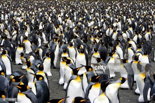 Pinguine auf den Horizont IV