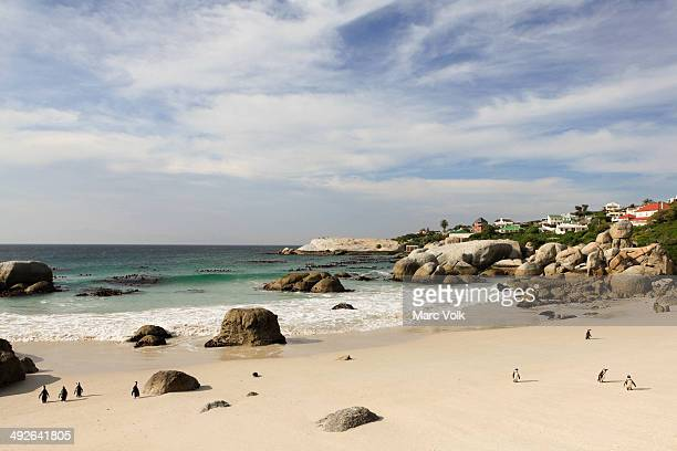 Penguins walking on beach, Simon's Town, South Africa