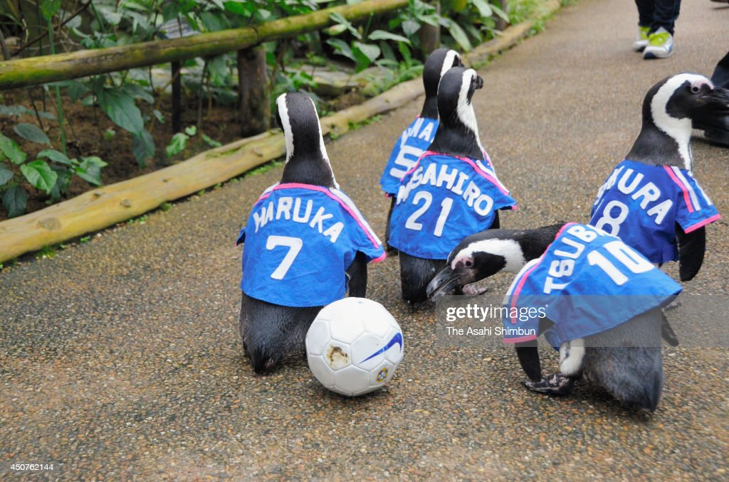 Penguins wearing Japan's uniform march at Matsue Vogel Park on June 11, 2014 in Matsue, Shimane, Japan.