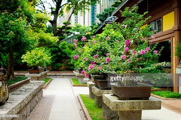 Penjing Garden