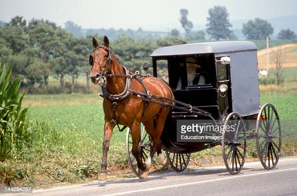 Pennsylvania Lancaster County Amish Horse And Buggy