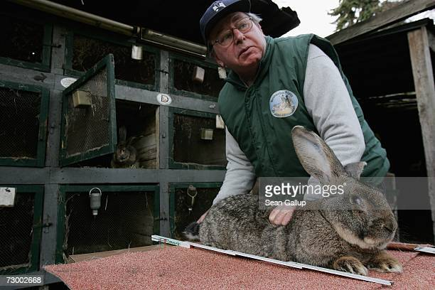 Pensioner Karl Szmolinsky who raises a breed of rabbits called giant grays measures Robert 2 an 85kg giant grey who is 74cm long and has ears 255cm...