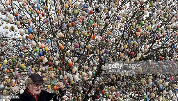 Pensioner Volker Kraft stands in front of his apple tree which he and his family have decorated with 10000 Easter eggs on March 24 2013 in Saalfeld...