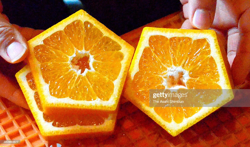 Pentagon shaped iyokan citrus fruits are seen on January 15, 2014 in Yawatahama, Ehime, Japan. Farmers wish to promote these pentagon-shaped citrus fruits or 'Gokaku no Iyokan,' which can also mean 'sweet smell of success in exams,' as a good luck charm for students in the upcoming entrance exam season, and to revive the popularity of iyokan fruits.