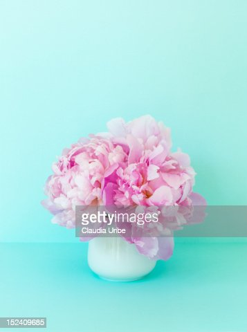Peonies in a white vase : Stock Photo