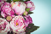 Close up of pink colored peony flowers on blue background. Copy space on the right side of the image.