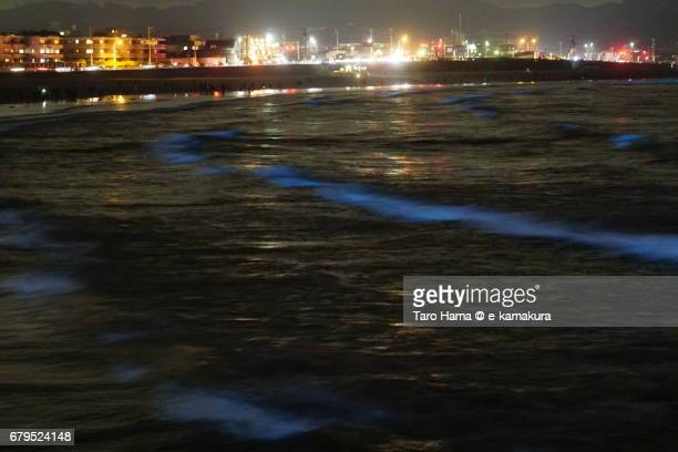 People and blue light bioluminescence from Noctiluca scintillans on the night beach in Kamakura, Japan