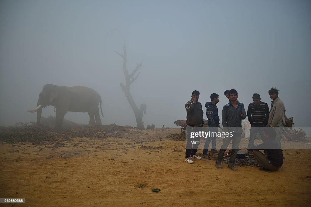 People and elephant photographed during early morning in winter at bank of Yamuna on December 9, 2015 in New Delhi, India.