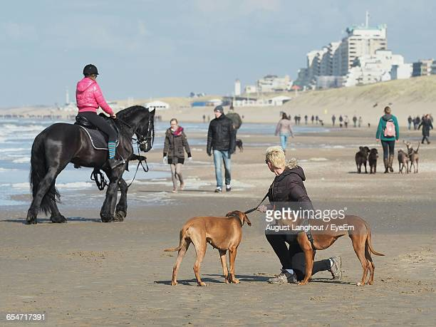 People And Horse With Dogs On Shore