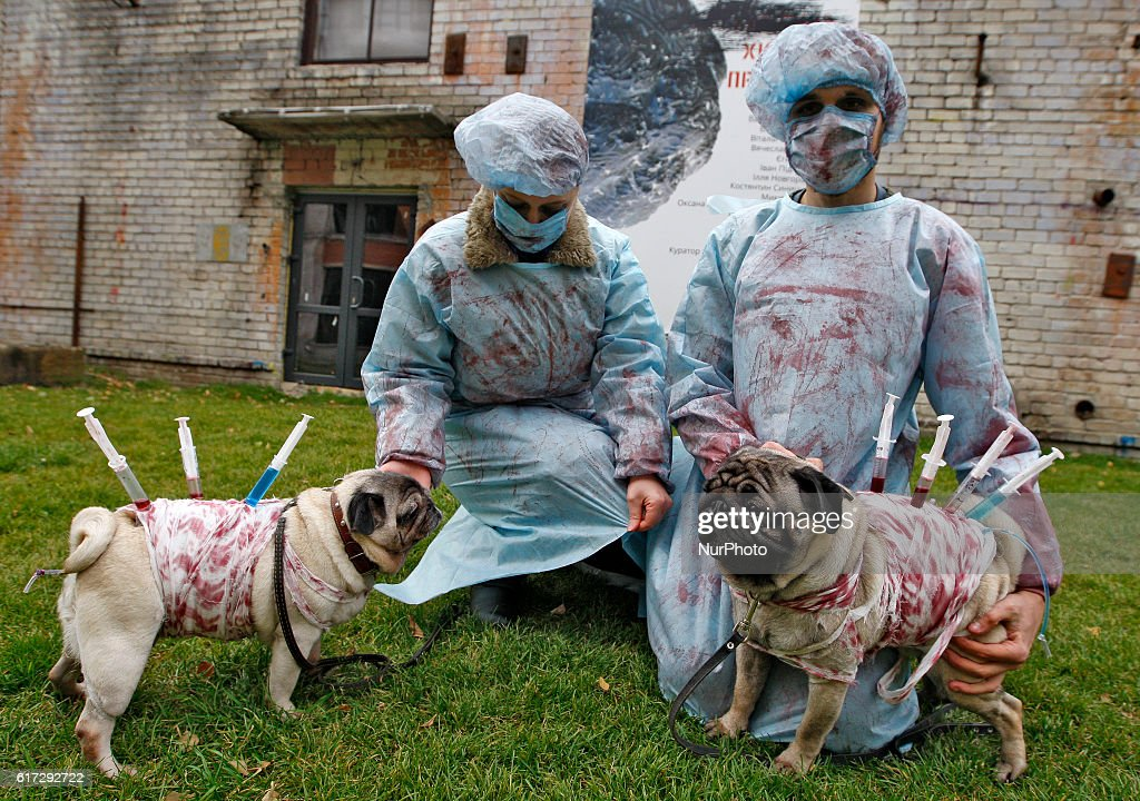 people and pugs dressed in various halloween style costumes attend a party of fans of the - Pugs Halloween