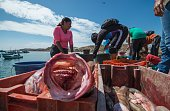 People are seen at the Cancas pier in Tumbes northern Peru on July 13 2016 Overfishing has put in risk the subsistence of the 30000 artisanal...