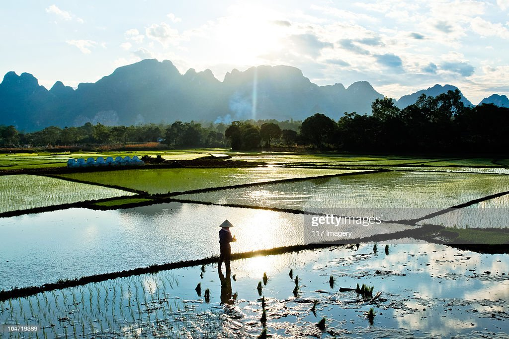 People at work in water rice paddy, North Vietnam