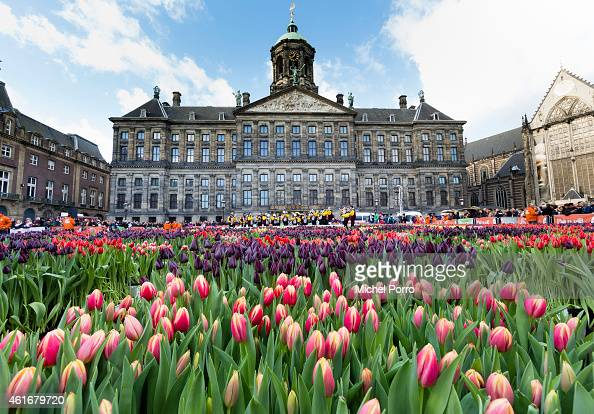 People attend Dutch National Tulip Day in front of the Royal Palace at Dam Square with the theme 'share joy give tulips' on January 17 2015 in...