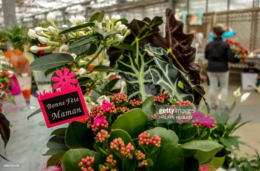 People buy flowers for Mother's Day on May 29, 2016 in Godewaersvelde, northern France. / AFP / PHILIPPE