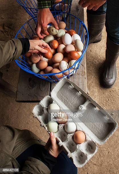 people buying free range organic eggs