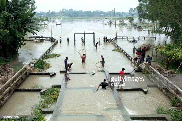 SARIAKANDHI BOGRA BANGLADESH People catch fish with nets in a switch gate at Sariakandi Bogra According to authorities floods caused by heavy...