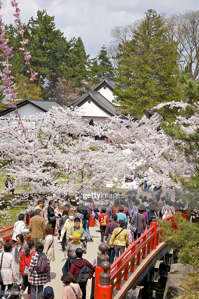 People crossing bridge in cherry blossom festival