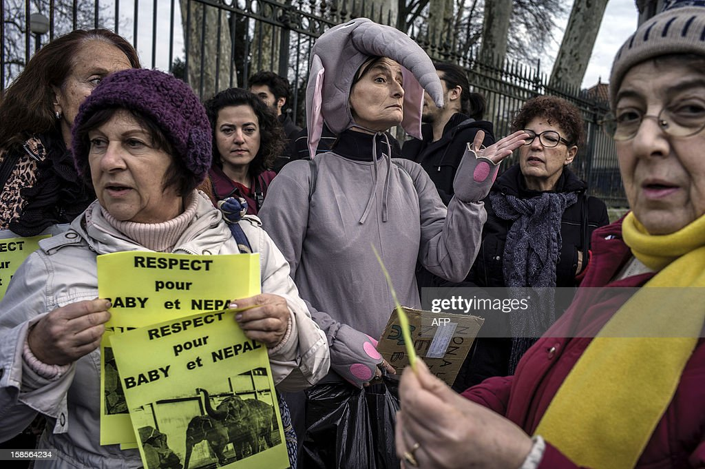 People demonstrate against Baby and Nepal's euthanasia, two elephants who both have tuberculosis, on December 19, 2012 in front of the Parc de la Tete d'Or zoo in Lyon, central eastern France. The two elephants have been given a Christmas reprieve after an appeal to President Francois Hollande and an Internet campaign to save them.