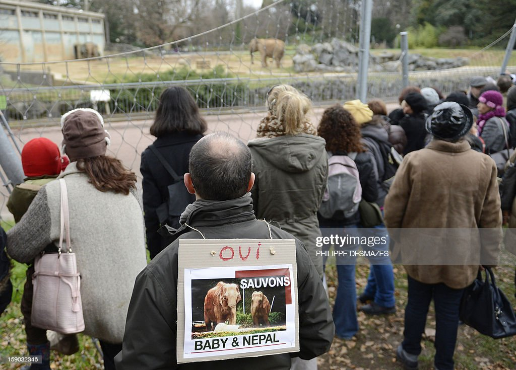 People demonstrate to save Baby and Nepal, two elephants suffering from tuberculosis in front of their enclosure on January 6, 2013 at the 'Parc de la Tete d'Or' Zoo in Lyon, centraleastern France. The two ailing middle-aged elephants that French officials have wanted put down have been given a Christmas reprieve after an appeal to President Francois Hollande and an internet campaign to save them (as written on the boards).
