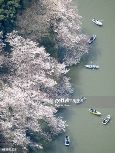 People enjoy cherry blossoms from boats in Chidorigafuchi a moat in central Tokyo in this photo taken from a Kyodo News helicopter on April 2 as the...