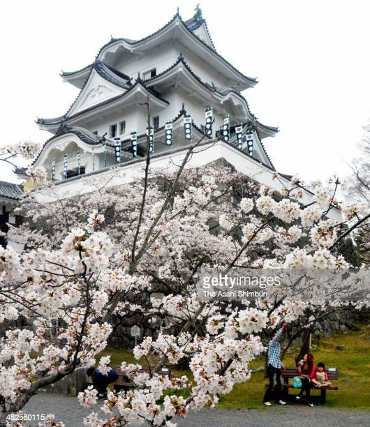 People enjoy cherry blossoms in bloom at Iga Ueno Castle onApril 3 2014 in Iga Mie Japan