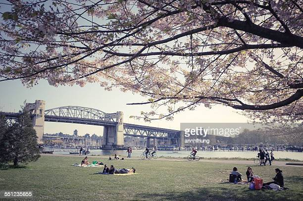 People Enjoy Cherry Blossoms