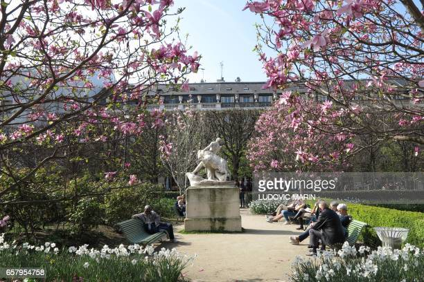 TOPSHOT People enjoy the sun and warm spring temperatures as magnolias are in bloom in the garden of the PalaisRoyal on March 26 in the center of the...