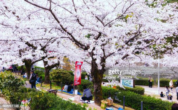 People enjoying hanami (cherry blossom viewing party) under the cherry blossoms