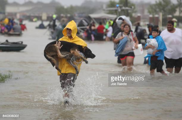 People evacuate their homes after the area was inundated with flooding from Hurricane Harvey on August 28 2017 in Houston Texas Harvey which made...