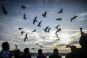 People feed seagulls as they travel on the Bosphorus on November 19 in Istanbul AFP PHOTO/BULENT KILIC