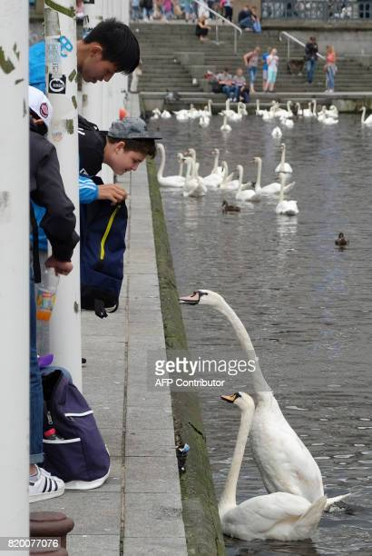 People feed swans at the Alsterufer in Hamburg northern Germany on July 202017 / AFP PHOTO / PATRIK STOLLARZ