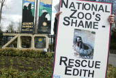 People for the Ethical Treatment of Animals member holds a sign and recent photograph of chimpanzee Edith which was born at the National Zoo in 1957...
