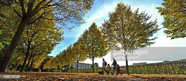 People go for a walk in a park where the leaves of the trees change their colour as Autumn arrives in the eastern German city of Weimar on October 8...