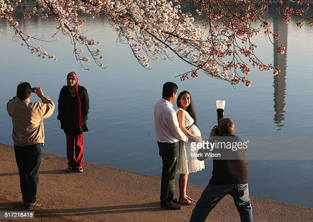 People have their pictures taken at the Tidal Basin where the Cherry Blossoms are blooming March 24 2016 in Washington DC The National Park Service...