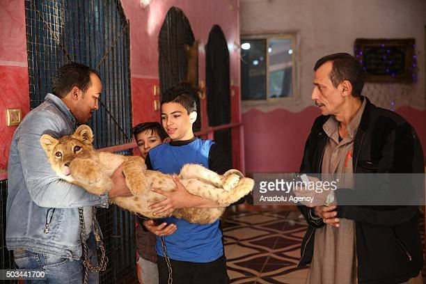 People hold a baby tiger at the house of Egyptian Muhammed Salah who lives in a a three storey house that has been turned into a zoo by his...